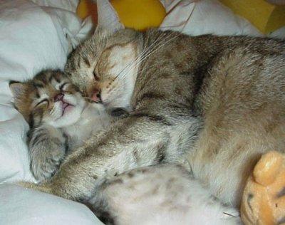 photo chat dormant
