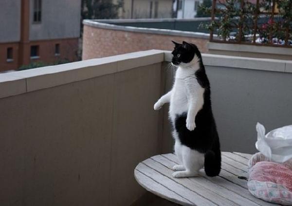 pingouin chat