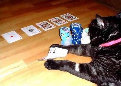 poker chat