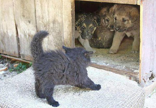 Rencontre chien et chat contact rencontre rencontrer des cougar site