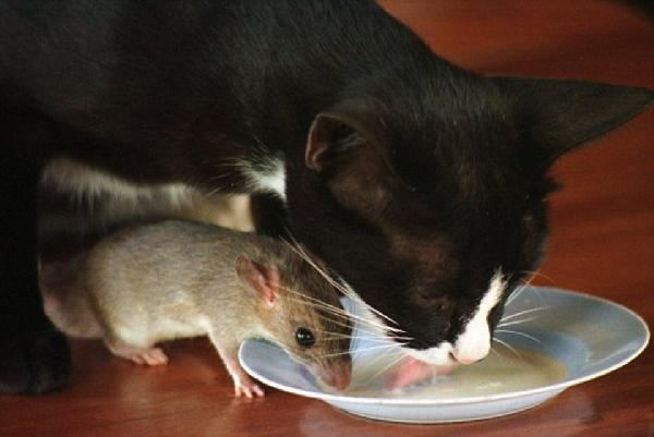 repas entre amis