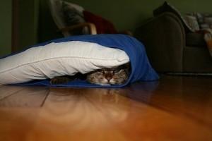 se cacher
