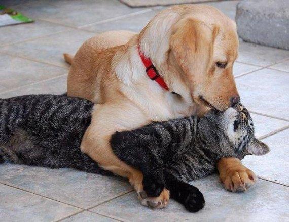 """Résultat de recherche d'images pour """"chat et chien mignon"""""""