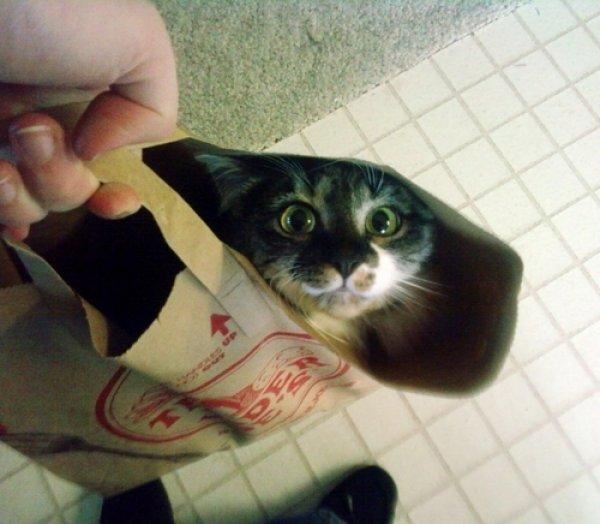 transporter un chat
