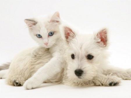 Un chat et un chien chat et chien sur chat - Photo de chien et chat mignon ...