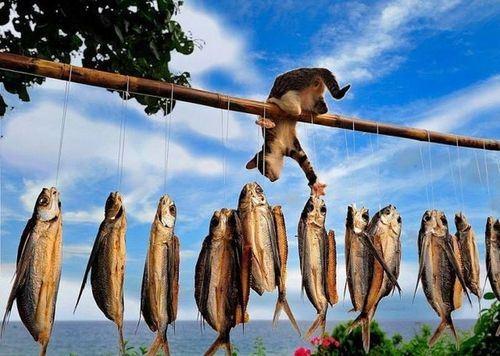 vol de poissons